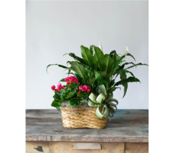 Double Plant Basket in College Station TX, Postoak Florist