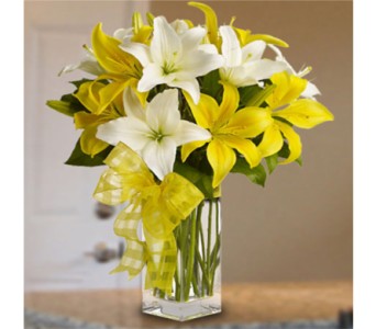 Spring Lilies in Indianapolis IN, George Thomas Florist