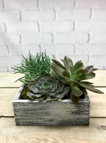 Wooden Box Succulent Terrarium in Tampa FL, Jennie's Flowers