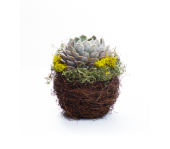 Nesting Succulent in Oshkosh WI, House of Flowers