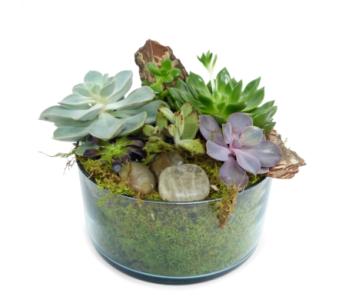 Recycled Succulents in Silver Spring MD, Bell Flowers, Inc