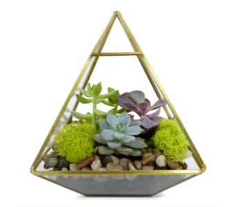 Geometric Succulents by Bell Flowers in Silver Spring MD, Bell Flowers, Inc