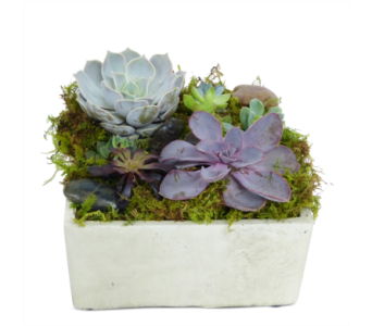 Cement Succulents in Silver Spring MD, Bell Flowers, Inc