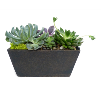 Tapered Succulents by Bell Flowers in Silver Spring MD, Bell Flowers, Inc