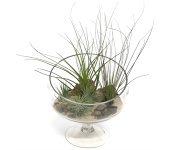 Bias Bowl Air Plants in Silver Spring MD, Bell Flowers, Inc