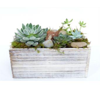 Whitewash Succulents by Bell Flowers in Silver Spring MD, Bell Flowers, Inc