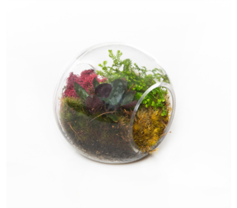 Terrarium Globe in Little Rock AR, Tipton & Hurst, Inc.
