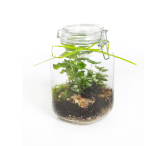 Terrarium Jar in Little Rock AR, Tipton & Hurst, Inc.