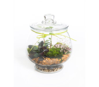 Terrarium Pot in Little Rock AR, Tipton & Hurst, Inc.
