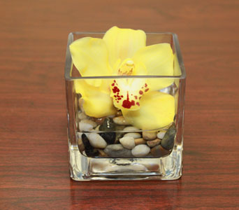 Yellow Orchid Cube in Seattle WA, Topper's European Floral Design