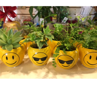Emojie Plants in Bismarck ND, Dutch Mill Florist, Inc.