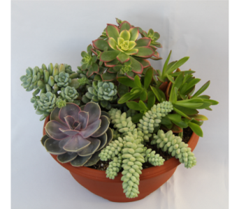 Small Succulent Garden in Zeeland MI, Don's Flowers & Gifts