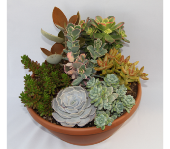 Medium Succulent Garden in Zeeland MI, Don's Flowers & Gifts