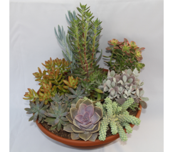 Large Succulent Garden in Zeeland MI, Don's Flowers & Gifts