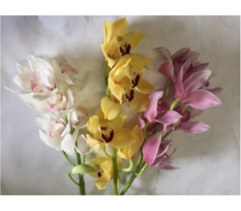 CYMBIDIUM ORCHIDS - LOOSE CUT  in Philadelphia PA, Schmidt's Florist & Greenhouses