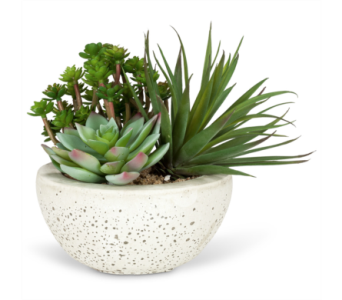 Artificial Succulent Garden in Ajax ON, Reed's Florist Ltd