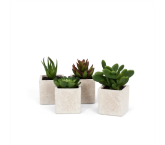 Artificial Succulent In Ivory Square Pot  in Ajax ON, Reed's Florist Ltd