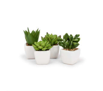 Artificial Succulent In White Square Pot in Ajax ON, Reed's Florist Ltd