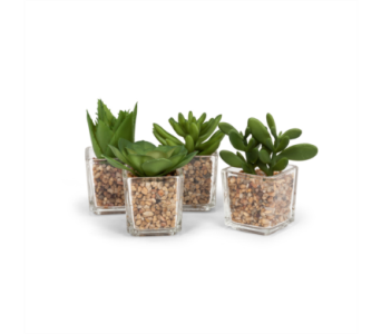 Artificial Succulent In Clear Square Pot in Ajax ON, Reed's Florist Ltd