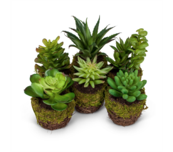 Artificial Succulent In Moss Pot  in Ajax ON, Reed's Florist Ltd