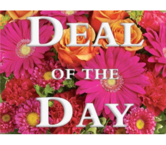 Deal of the Day in Miramichi NB, Country Floral Flower Shop