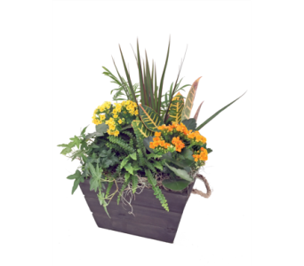 Griffen Planter in St Catharines ON, Vine Floral
