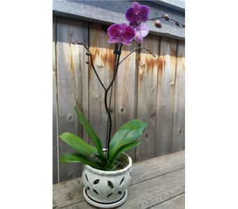 Large Orchid in Lawrence KS, Owens Flower Shop Inc.