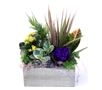 Tropical Paradise in Grimsby ON, Cole's Florist Inc.