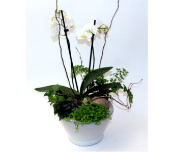 Woodland Orchid Sm. in Grimsby ON, Cole's Florist Inc.