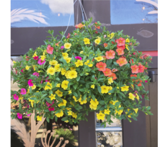 Million Bell Hanging Basket in Eau Claire WI, Brent Douglas