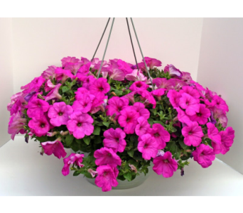 Pretty Petunia in Kingsport TN, Holston Florist Shop Inc.
