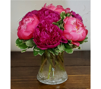 Peonies Prestine in Frisco TX, Patti Ann's Flowers