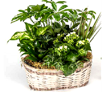 Oval Planter Basket in Timmins ON, Timmins Flower Shop Inc.