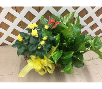 Double Plant Basket in Purcellville VA, Purcellville Florist