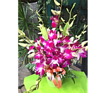 Mother's Day Special- Orchid Arrangement in Honolulu HI, Stanley Ito Florist