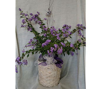 Butterfly Bush in Newton KS, Designs By John Flowers & Tuxedos, Inc