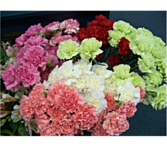 CARNATIONS in Claremont NH, Colonial Florist