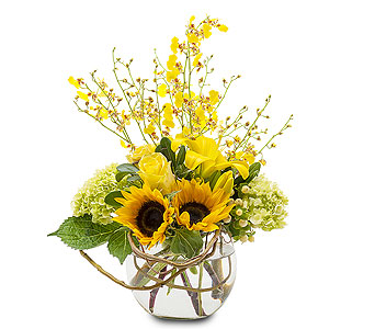 Sunshine Orchid Rays in Spartanburg SC, A-Arrangement Florist