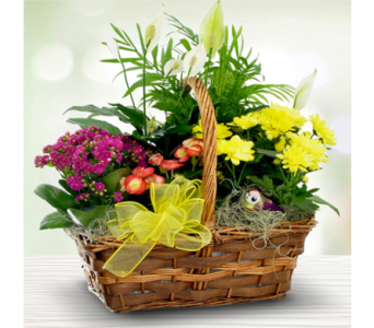Summertime Picnic Garden Basket in Indianapolis IN, George Thomas Florist