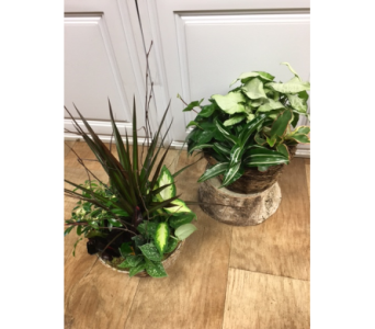 Masculine Planters in Fargo ND, Dalbol Flowers & Gifts, Inc.