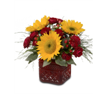 Ruby Sunflowers in St. Louis MO, Walter Knoll Florist