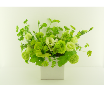 Green with Envy in North Vancouver BC, Special Moments Flowers And Gifts