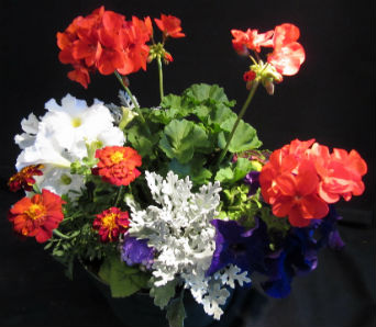 Mixed Geranium Planter in Farmington CT, Haworth's Flowers & Gifts, LLC.