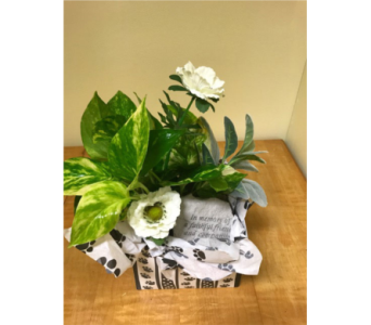 Faithful Friend Paw Print Gift Box in Neenah WI, Sterling Gardens