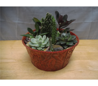 Succulent Dish Garden *Small* in Athens GA, Flowers, Inc.