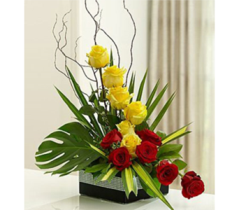Modern in San Antonio TX, Blooming Creations Florist