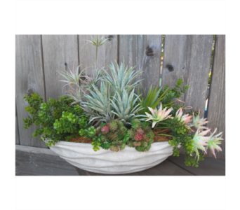 Succulents in Ceramic Boat in Lawrence KS, Owens Flower Shop Inc.