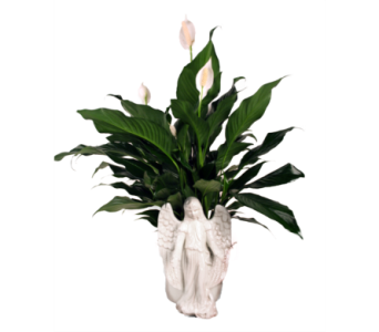 Angel Planter Peace Lily in Indianapolis IN, McNamara Florist