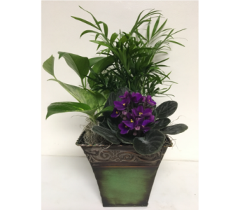Green Metal Planter with Violet- 3 Sizes Available in Wyoming MI, Wyoming Stuyvesant Floral