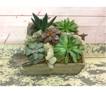 Box of Succulents  in Wellington FL, Wellington Florist